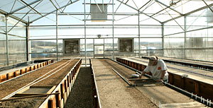 Planting seed in new greenhouse